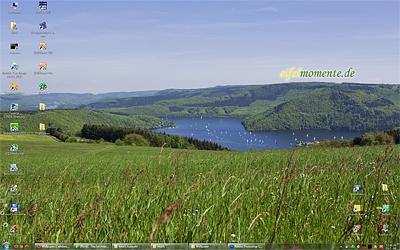 eifelmomente.de Wallpaper Blumenwiese am Rursee