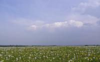 Pusteblumen und Quellwolken auf der Dreiborner Hochfläche