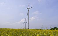 Rapsfeld und Windräder auf der Dreiborner Hochfläche