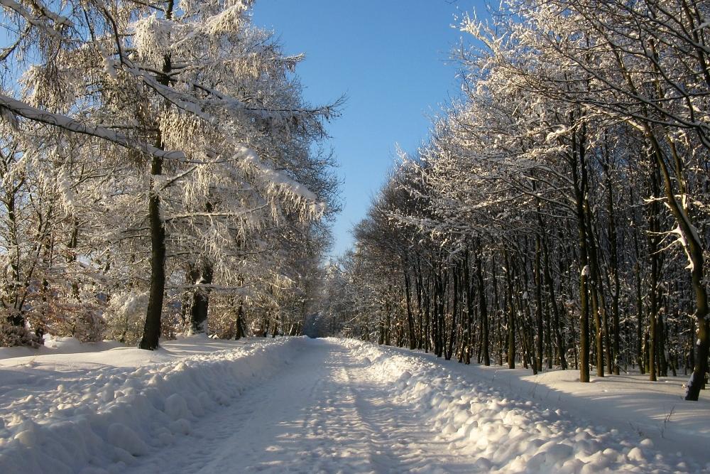 http://www.eifelmomente.de/albums/Foto_des_Tages/2010_01_27_-_05_Winterwunderland_bei_Konzen_bearb_ausschn.jpg