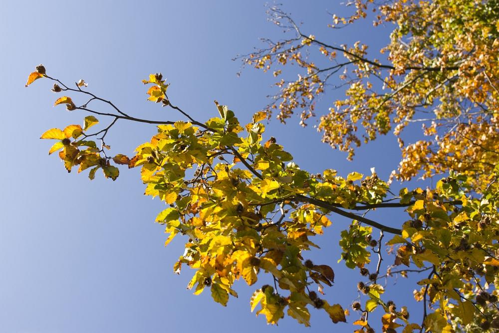 http://www.eifelmomente.de/albums/Nordeifel/Herbst/2010_10_03_Rurtal_Eicherscheid_bis_Dedenborn/2010_10_03_-_037_Panoramablick_auf_Widdau_DNG_bearb_ausschn.jpg