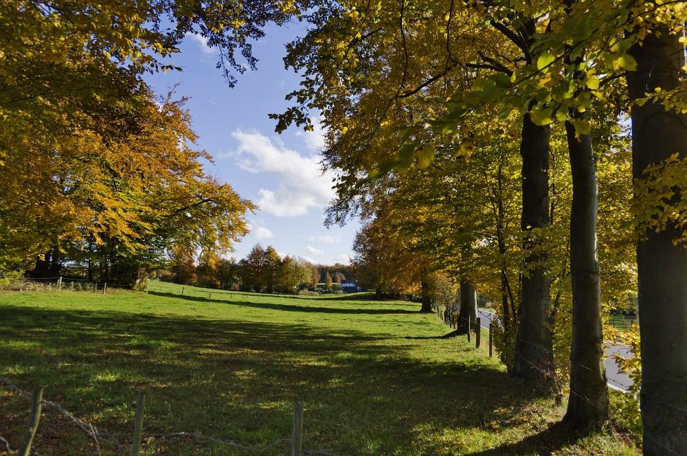 http://www.eifelmomente.de/albums/Nordeifel/Herbst/2010_10_31_Bickerath_bis_Stolberg/2010_10_31_-_020_Bickerather_Senke_DNG_bearb.jpg