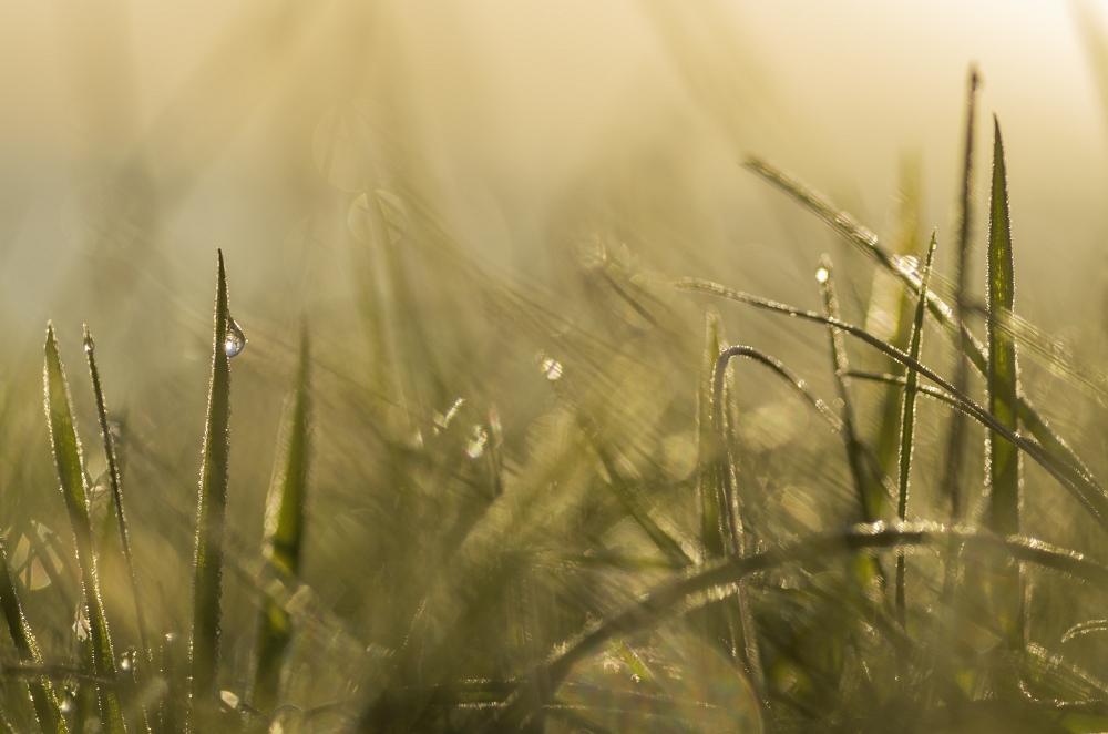 http://www.eifelmomente.de/albums/Nordeifel/Herbst/2012_09_30_Sonnenaufgang_NP/2012_09_30_-_147_Bei_Morsbach_DNG_bearb_ausschn.jpg