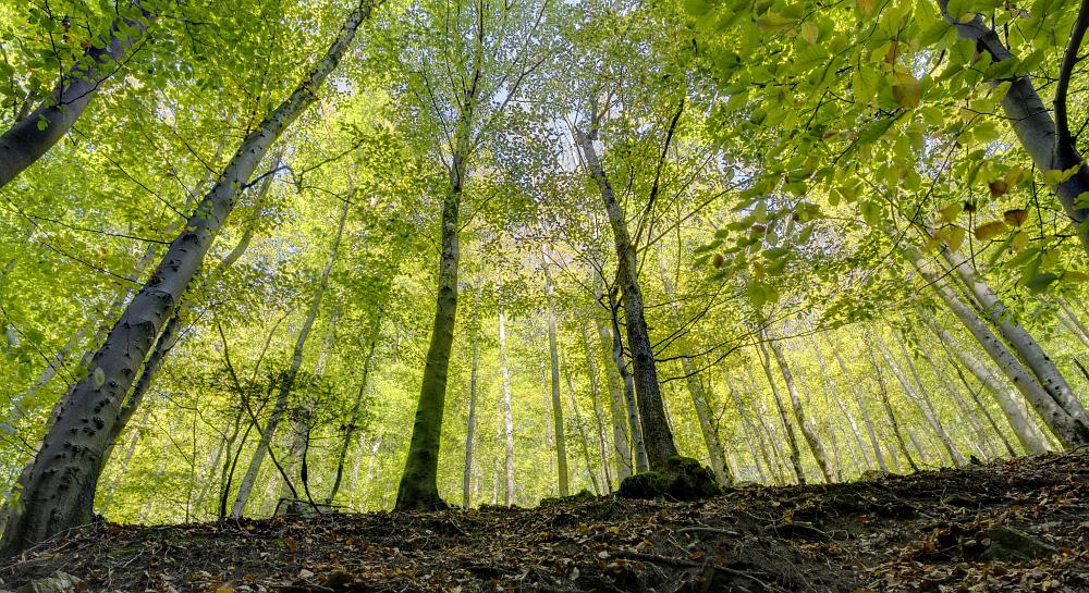 http://www.eifelmomente.de/albums/Nordeifel/Herbst/2012_10_11_Gileppe_Hoegne/2012_10_11_-_250_Hoegne_DNG_DRI_bearb_ausschn.jpg
