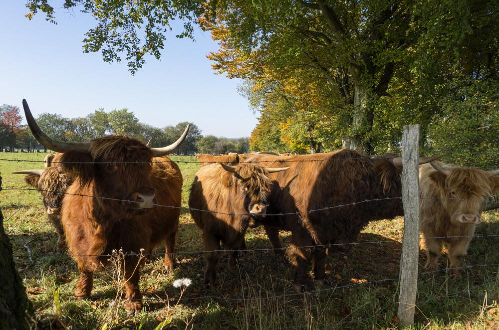 http://www.eifelmomente.de/albums/Nordeifel/Herbst/2015_Herbst/2015_10_11_-_007_Simmerath_Kranzbruch_DNG_bearb.jpg