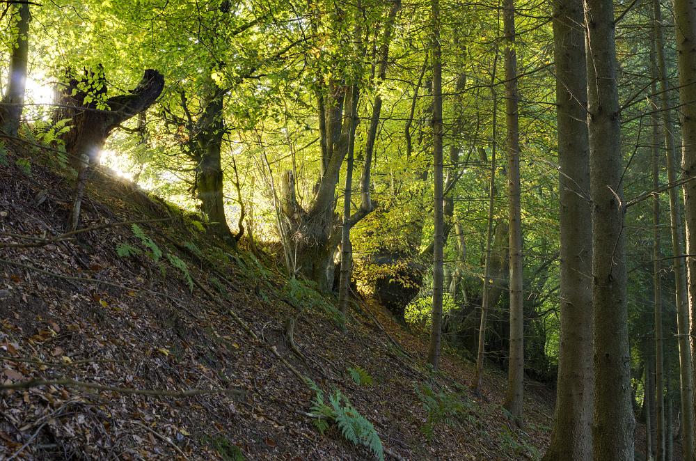 http://www.eifelmomente.de/albums/Nordeifel/Herbst/2015_Herbst/2015_10_11_-_199_Simmerath_Auelt-Pfad_DNG_DRI_Photomatix_bearb.jpg