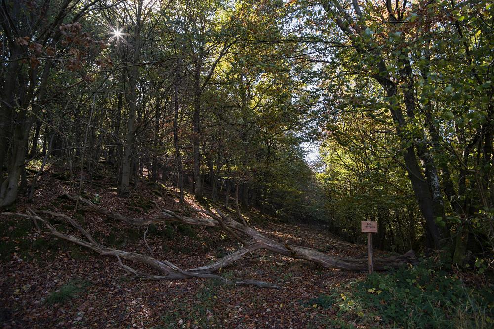 http://www.eifelmomente.de/albums/Nordeifel/Herbst/2016_09_28_10_05_Nationalpark_Eifel/2016_10_05_-_242_Urfttal_DNG_bearb.jpg