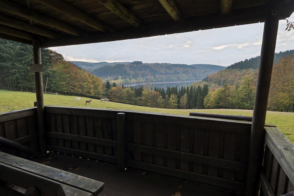 http://www.eifelmomente.de/albums/Nordeifel/Herbst/2016_10_22_Hubertusnacht/2016_10_22_-_062_Wildfreigehege_Hellenthal_DNG_DRI_bearb.jpg