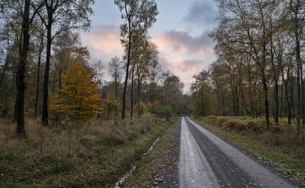 http://www.eifelmomente.de/albums/Nordeifel/Herbst/2016_10_29-31_Herbstabende/2016_10_29_-_008_Huertgenwald_DNG_DRI_bearb_ausschn.jpg