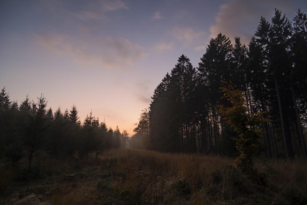 http://www.eifelmomente.de/albums/Nordeifel/Herbst/2016_10_29-31_Herbstabende/2016_10_29_-_053_Huertgenwald_DNG_DRI_bearb.jpg
