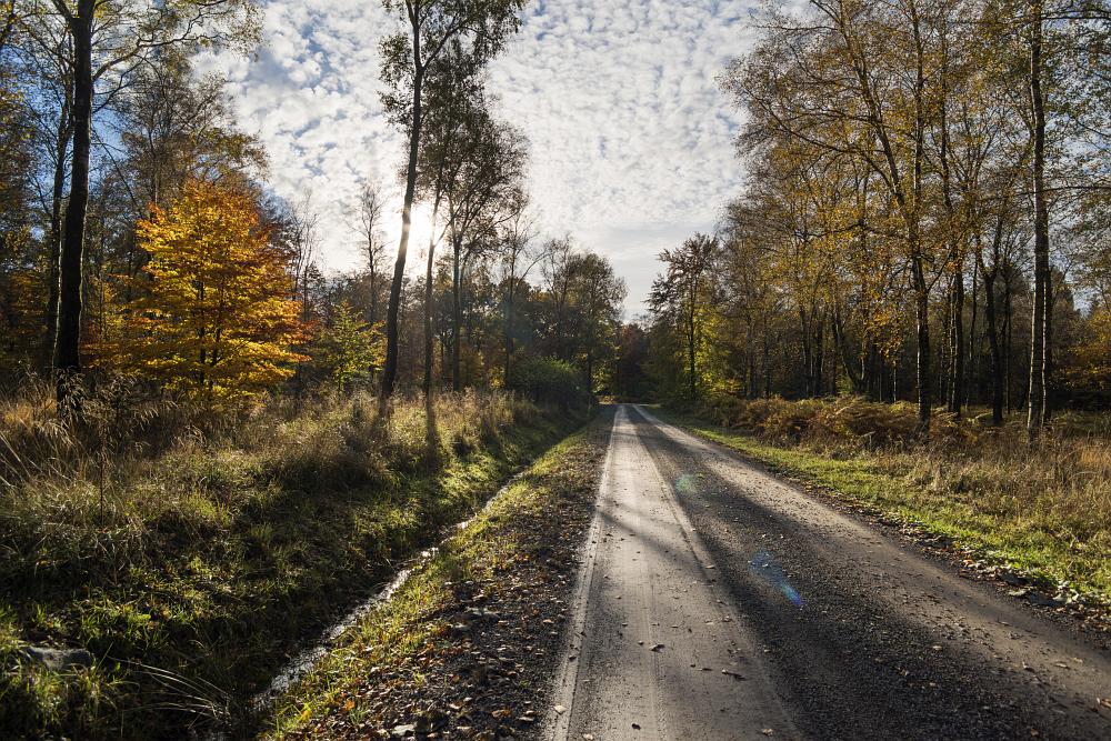 http://www.eifelmomente.de/albums/Nordeifel/Herbst/2016_10_29-31_Herbstabende/2016_10_30_-_068_Huertgenwald_DNG_DRI_bearb.jpg