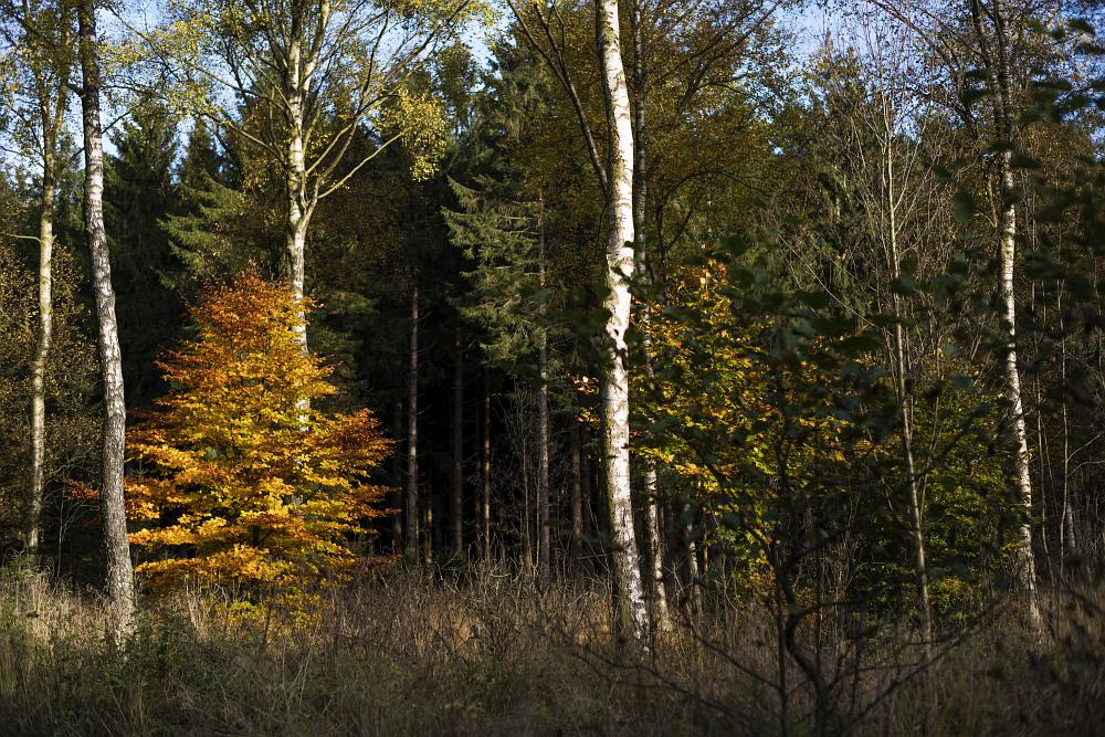 http://www.eifelmomente.de/albums/Nordeifel/Herbst/2016_10_29-31_Herbstabende/2016_10_30_-_071_Huertgenwald_DNG_bearb.jpg