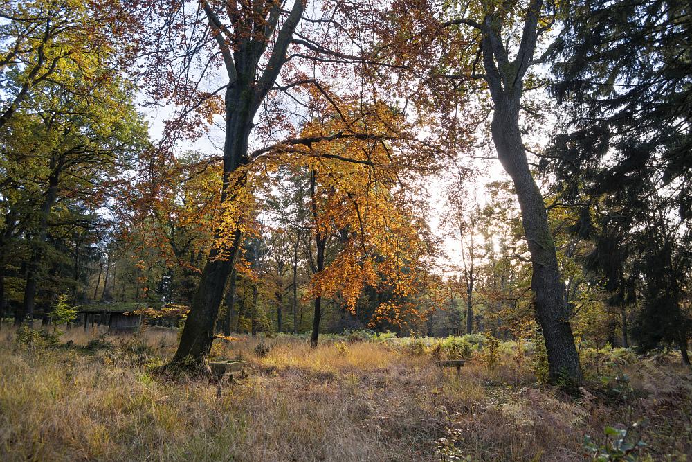 http://www.eifelmomente.de/albums/Nordeifel/Herbst/2016_10_29-31_Herbstabende/2016_10_30_-_088_Huertgenwald_DNG_DRI_bearb.jpg