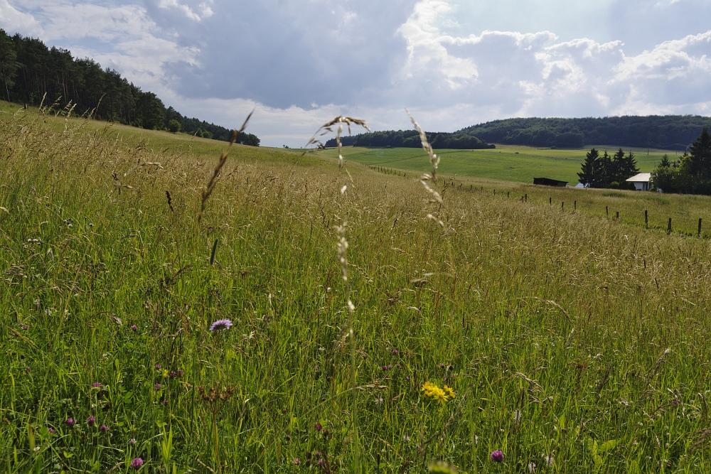 http://www.eifelmomente.de/albums/Nordeifel/Sommer/2011_06_30_Kalkeifel_Vulkaneifel/2011_06_30_-_079_Hoenselberg_DNG_bearb.jpg