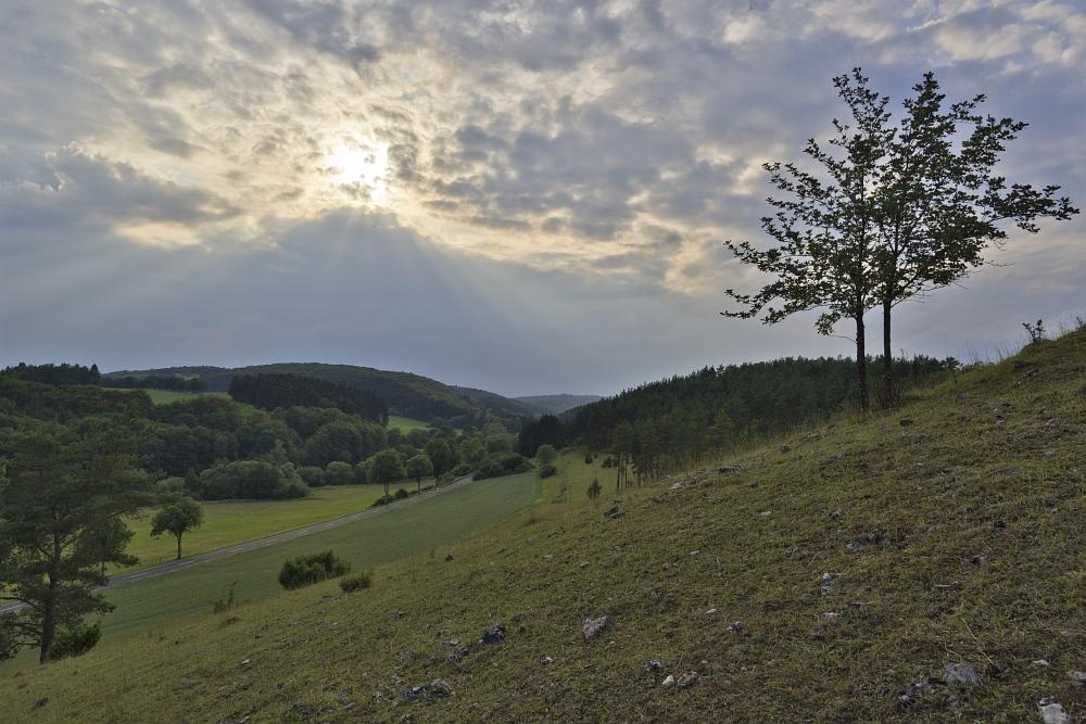 http://www.eifelmomente.de/albums/Nordeifel/Sommer/2011_06_30_Kalkeifel_Vulkaneifel/2011_06_30_-_145_NSG_Oberes_Ahrtal_DNG_bearb.jpg