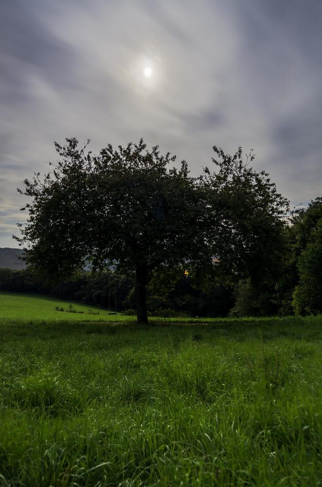 http://www.eifelmomente.de/albums/Nordeifel/Sommer/2012_08_14-31_Sommerende/2012_08_30_-_58_Hoevel_DNG_DRI_bearb.jpg