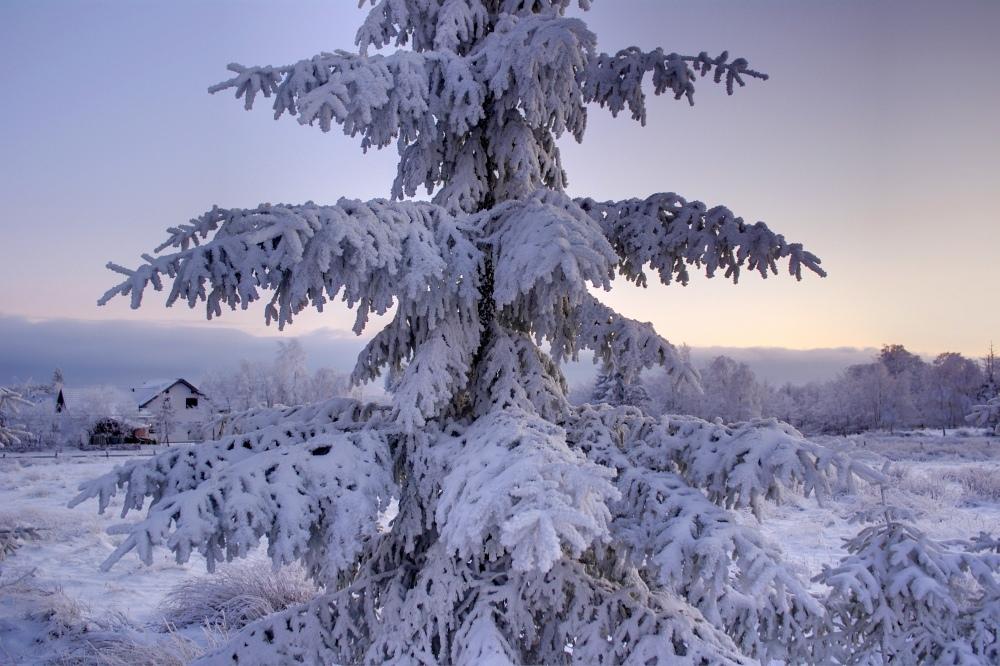 http://www.eifelmomente.de/albums/Nordeifel/Winter/2010_01_04_Sonnenuntergang_im_Winterwunderland/2010_01_04_-_25_Winterwunderland_bei_Muetzenich_DRI_bearb.jpg