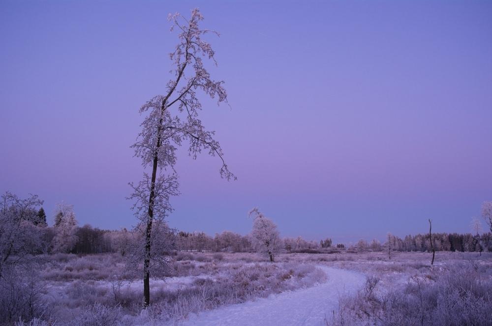 http://www.eifelmomente.de/albums/Nordeifel/Winter/2010_01_04_Sonnenuntergang_im_Winterwunderland/2010_01_04_-_36_Winterwunderland_bei_Muetzenich_DNG_bearb.jpg