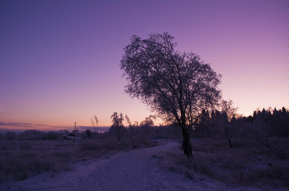 http://www.eifelmomente.de/albums/Nordeifel/Winter/2010_01_04_Sonnenuntergang_im_Winterwunderland/2010_01_04_-_42_Winterwunderland_bei_Muetzenich_DNG_bearb.jpg