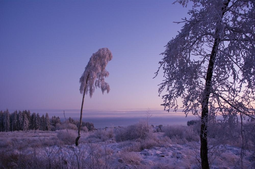 http://www.eifelmomente.de/albums/Nordeifel/Winter/2010_01_04_Sonnenuntergang_im_Winterwunderland/2010_01_04_-_44_Winterwunderland_bei_Muetzenich_DNG_bearb.jpg