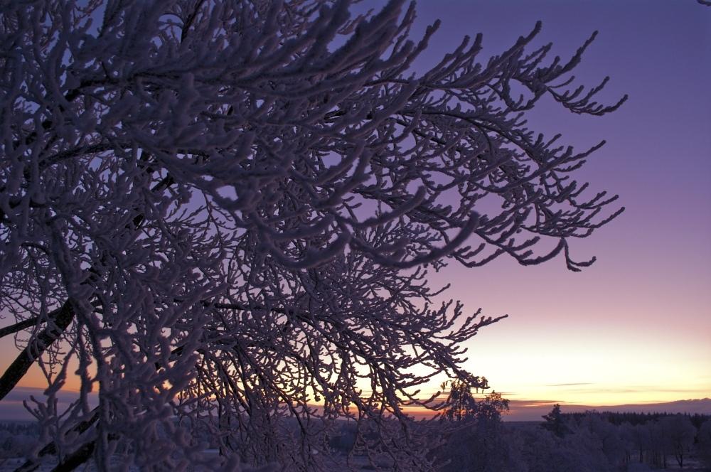 http://www.eifelmomente.de/albums/Nordeifel/Winter/2010_01_04_Sonnenuntergang_im_Winterwunderland/2010_01_04_-_51_Winterwunderland_bei_Muetzenich_DNG_bearb.jpg