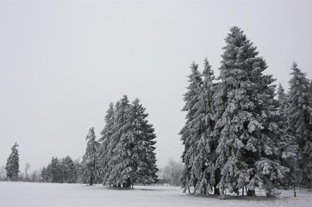 http://www.eifelmomente.de/albums/Nordeifel/Winter/2010_01_09_Schneewetter_im_Winterwunderland/2010_01_09_-_02_Schneewetter_im_Winterwunderland_DNG_bearb.jpg