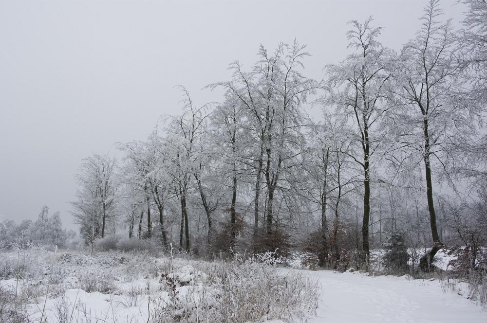 http://www.eifelmomente.de/albums/Nordeifel/Winter/2010_01_09_Schneewetter_im_Winterwunderland/2010_01_09_-_03_Schneewetter_im_Winterwunderland_DNG_bearb.jpg