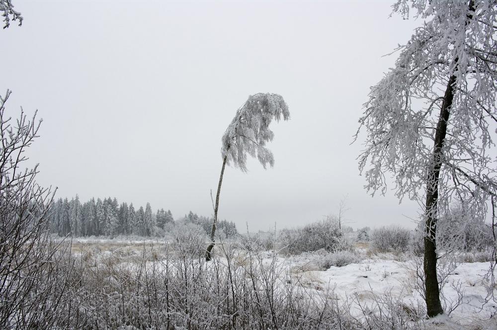 http://www.eifelmomente.de/albums/Nordeifel/Winter/2010_01_09_Schneewetter_im_Winterwunderland/2010_01_09_-_14_Schneewetter_im_Winterwunderland_DNG_bearb.jpg