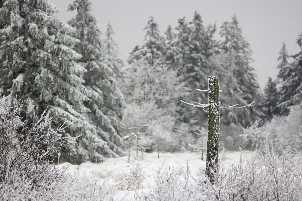 http://www.eifelmomente.de/albums/Nordeifel/Winter/2010_01_09_Schneewetter_im_Winterwunderland/2010_01_09_-_22_Schneewetter_im_Winterwunderland_DNG_bearb.jpg