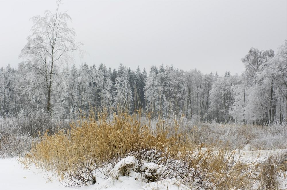 http://www.eifelmomente.de/albums/Nordeifel/Winter/2010_01_09_Schneewetter_im_Winterwunderland/2010_01_09_-_30_Schneewetter_im_Winterwunderland_DNG_bearb.jpg