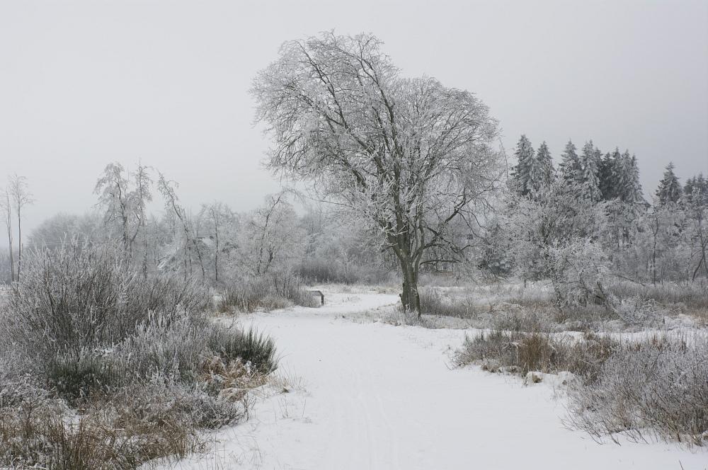 http://www.eifelmomente.de/albums/Nordeifel/Winter/2010_01_09_Schneewetter_im_Winterwunderland/2010_01_09_-_36_Schneewetter_im_Winterwunderland_DNG_bearb.jpg
