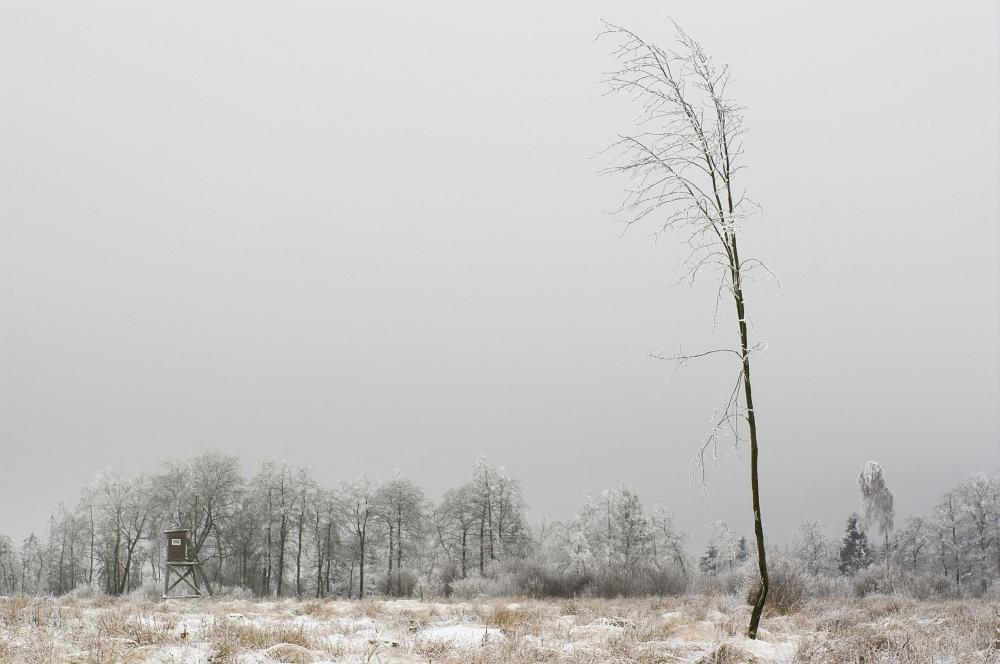 http://www.eifelmomente.de/albums/Nordeifel/Winter/2010_01_09_Schneewetter_im_Winterwunderland/2010_01_09_-_53_Schneewetter_im_Winterwunderland_DNG_bearb.jpg