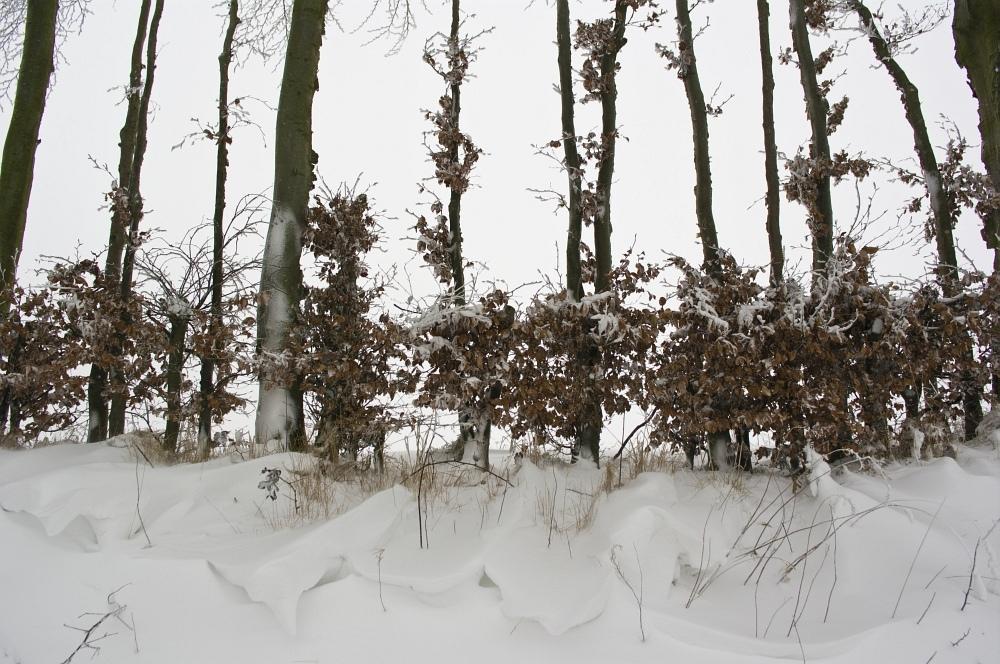 http://www.eifelmomente.de/albums/Nordeifel/Winter/2010_01_09_Schneewetter_im_Winterwunderland/2010_01_09_-_68_Schneewetter_im_Winterwunderland_DNG_2_bearb.jpg