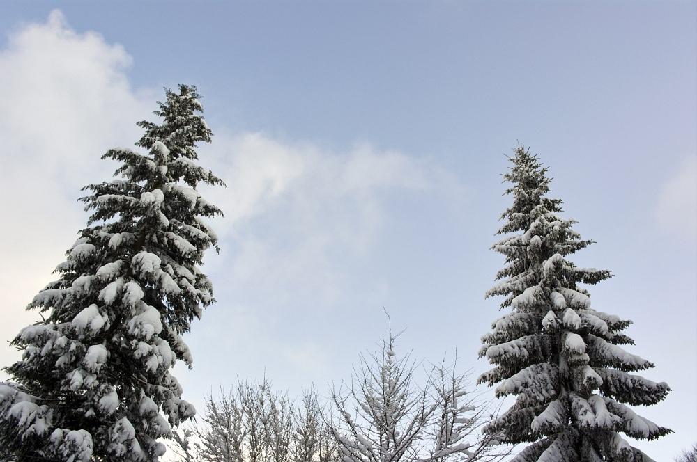 http://www.eifelmomente.de/albums/Nordeifel/Winter/2010_01_30_37cm_Schnee_in_Simmerath/2010_01_30_-_24_37cm_Schnee_in_Simmerath_DNG_bearb.jpg