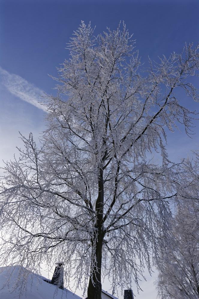 http://www.eifelmomente.de/albums/Nordeifel/Winter/2010_12_25_Tiefschnee_Simmerath/2010_12_25_-_058_Wiesen_am_Forsthaus_Simmerath_DNG_bearb.jpg