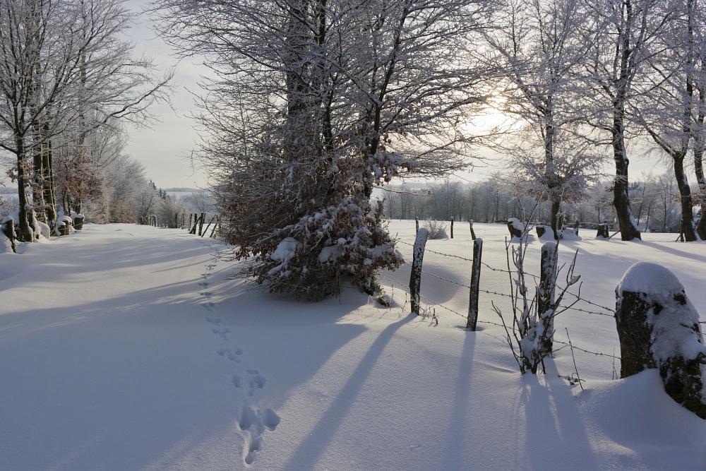 http://www.eifelmomente.de/albums/Nordeifel/Winter/2010_12_25_Tiefschnee_Simmerath/2010_12_25_-_102_Wiesen_am_Forsthaus_Simmerath_DNG_bearb_ausschn.jpg