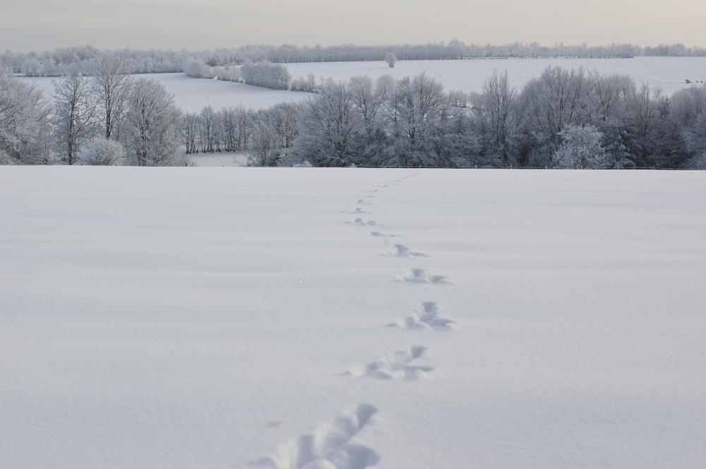 http://www.eifelmomente.de/albums/Nordeifel/Winter/2010_12_25_Tiefschnee_Simmerath/2010_12_25_-_129_Wiesen_am_Forsthaus_Simmerath_DNG_bearb.jpg