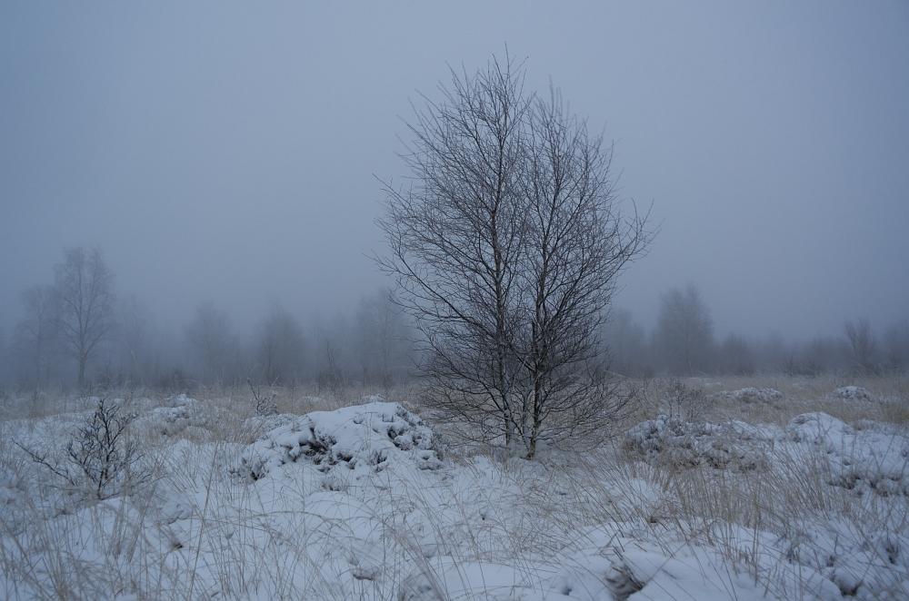 http://www.eifelmomente.de/albums/Nordeifel/Winter/2012_12_02_Abends_Fringshaus_Huppenbroich/2012_12_02_-_10_Bei_Fringshaus_DNG_bearb.jpg