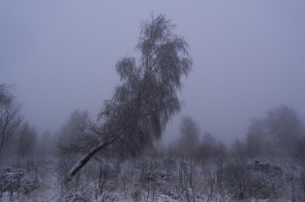 http://www.eifelmomente.de/albums/Nordeifel/Winter/2012_12_02_Abends_Fringshaus_Huppenbroich/2012_12_02_-_14_Bei_Fringshaus_DNG_bearb_ausschn.jpg