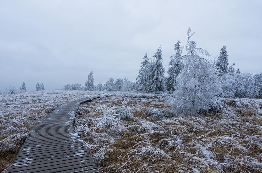 http://www.eifelmomente.de/albums/Nordeifel/Winter/2014_12_05-28_Winteranfang_Nordeifel/2014_12_05_-_33_Polleurvenn_DNG_bearb.jpg