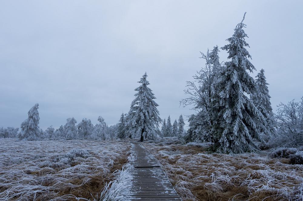 http://www.eifelmomente.de/albums/Nordeifel/Winter/2014_12_05-28_Winteranfang_Nordeifel/2014_12_05_-_35_Polleurvenn_DNG_bearb.jpg