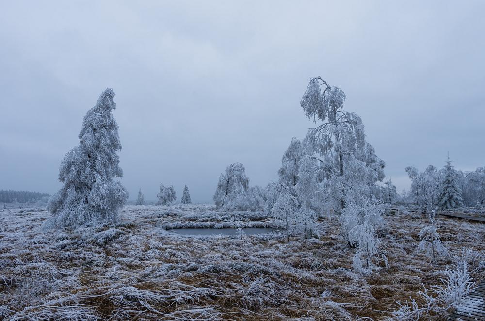 http://www.eifelmomente.de/albums/Nordeifel/Winter/2014_12_05-28_Winteranfang_Nordeifel/2014_12_05_-_38_Polleurvenn_DNG_bearb_ausschn.jpg