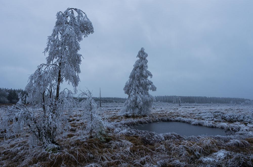 http://www.eifelmomente.de/albums/Nordeifel/Winter/2014_12_05-28_Winteranfang_Nordeifel/2014_12_05_-_40_Polleurvenn_DNG_bearb.jpg