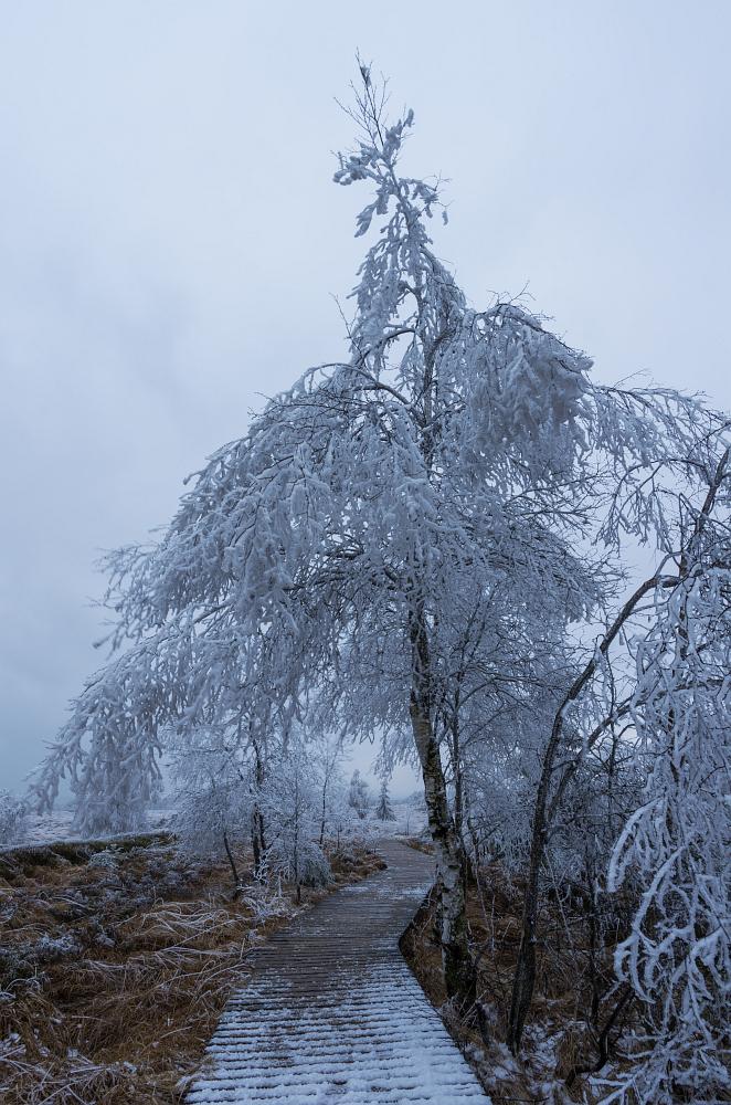 http://www.eifelmomente.de/albums/Nordeifel/Winter/2014_12_05-28_Winteranfang_Nordeifel/2014_12_05_-_45_Polleurvenn_DNG_bearb.jpg