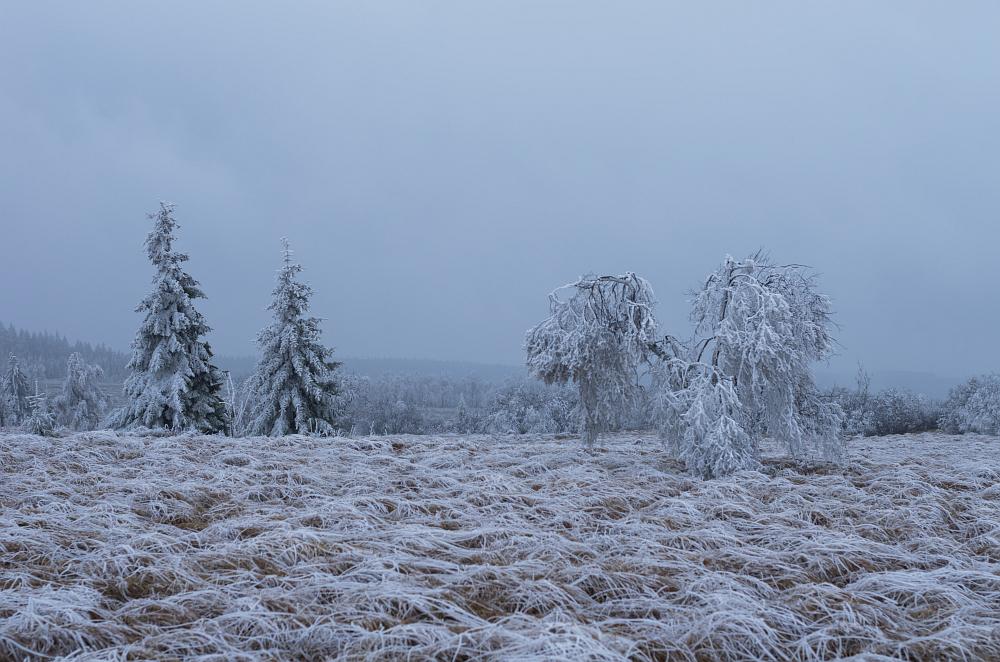 http://www.eifelmomente.de/albums/Nordeifel/Winter/2014_12_05-28_Winteranfang_Nordeifel/2014_12_05_-_49_Polleurvenn_DNG_bearb.jpg