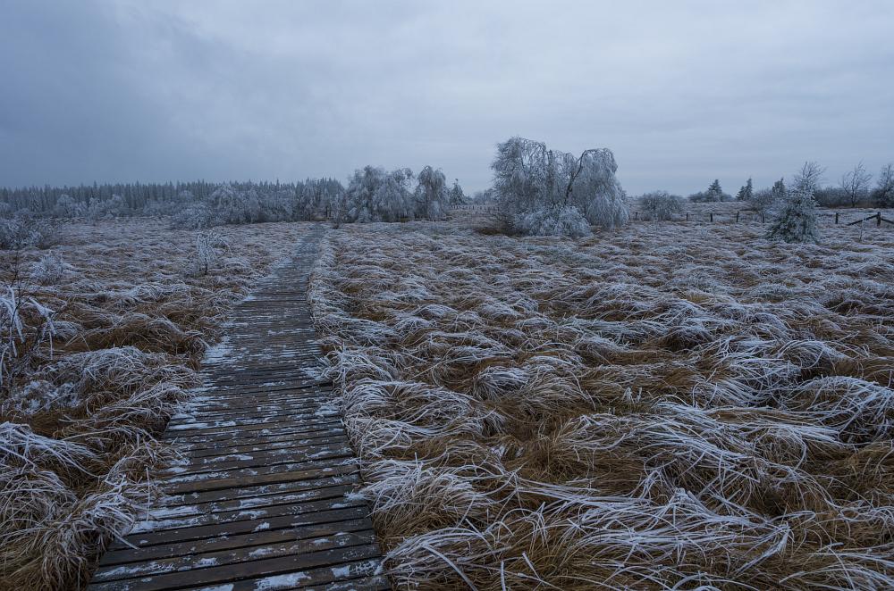 http://www.eifelmomente.de/albums/Nordeifel/Winter/2014_12_05-28_Winteranfang_Nordeifel/2014_12_05_-_54_Polleurvenn_DNG_bearb.jpg