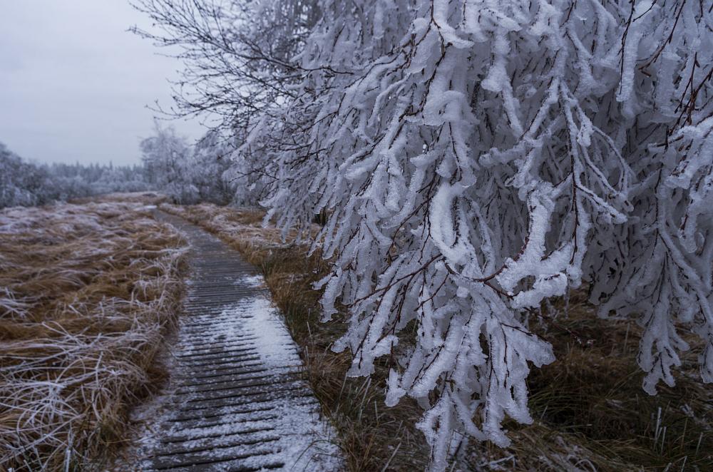 http://www.eifelmomente.de/albums/Nordeifel/Winter/2014_12_05-28_Winteranfang_Nordeifel/2014_12_05_-_61_Polleurvenn_DNG_bearb.jpg