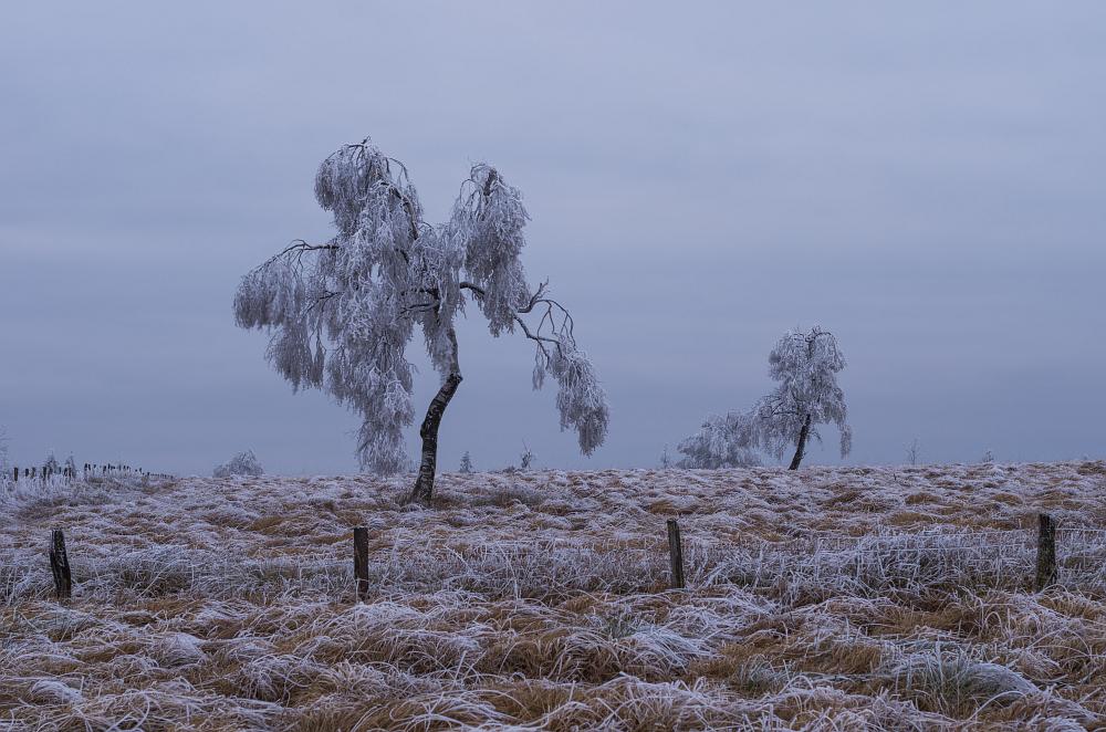 http://www.eifelmomente.de/albums/Nordeifel/Winter/2014_12_05-28_Winteranfang_Nordeifel/2014_12_05_-_67_Polleurvenn_DNG_bearb.jpg