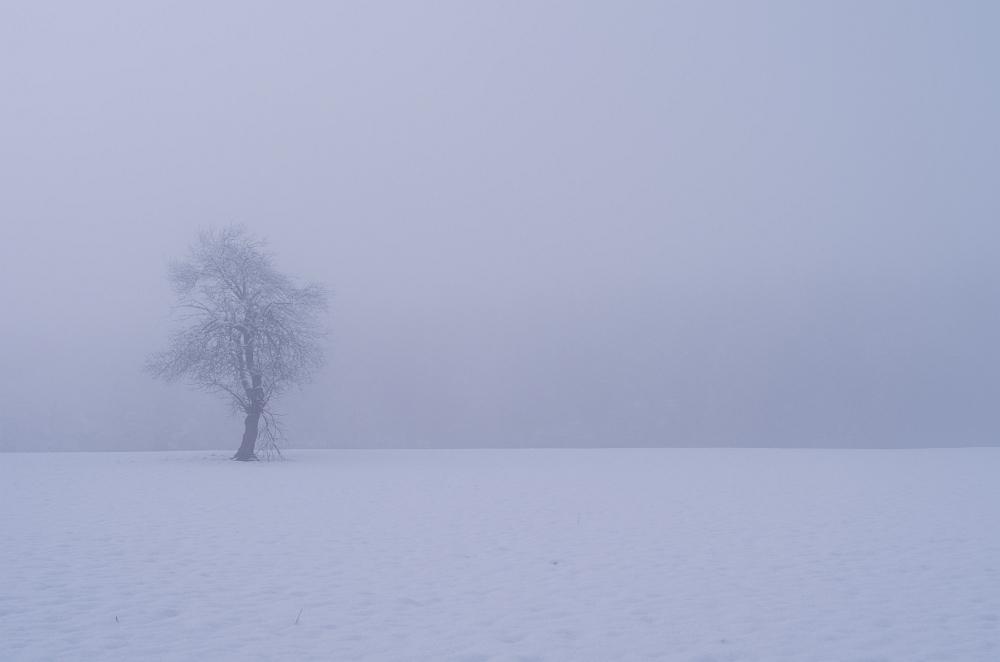 http://www.eifelmomente.de/albums/Nordeifel/Winter/2014_12_05-28_Winteranfang_Nordeifel/2014_12_14_-_201_Steling_DNG_bearb.jpg