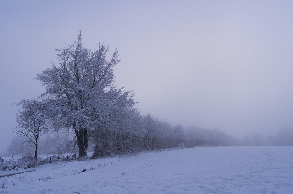 http://www.eifelmomente.de/albums/Nordeifel/Winter/2014_12_05-28_Winteranfang_Nordeifel/2014_12_14_-_204_Steling_DNG_bearb.jpg
